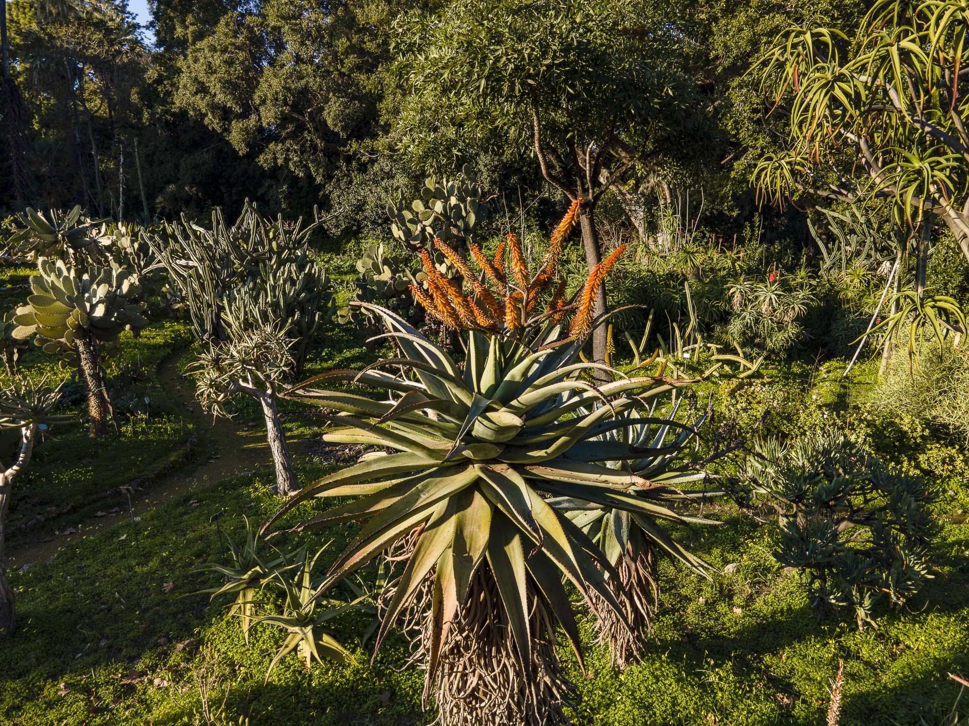 Orto_Botanico_037DJI_0011