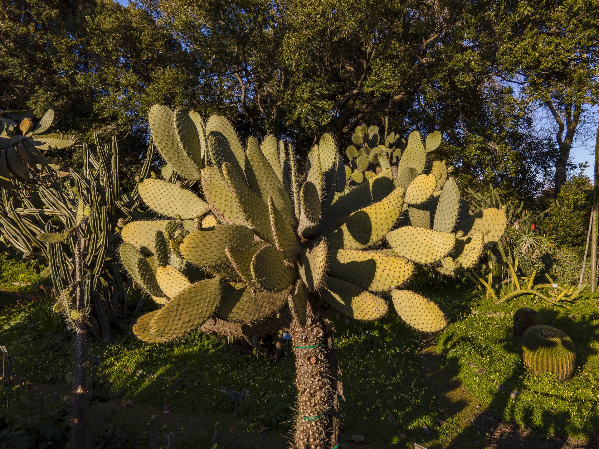 Orto_Botanico_039DJI_0015