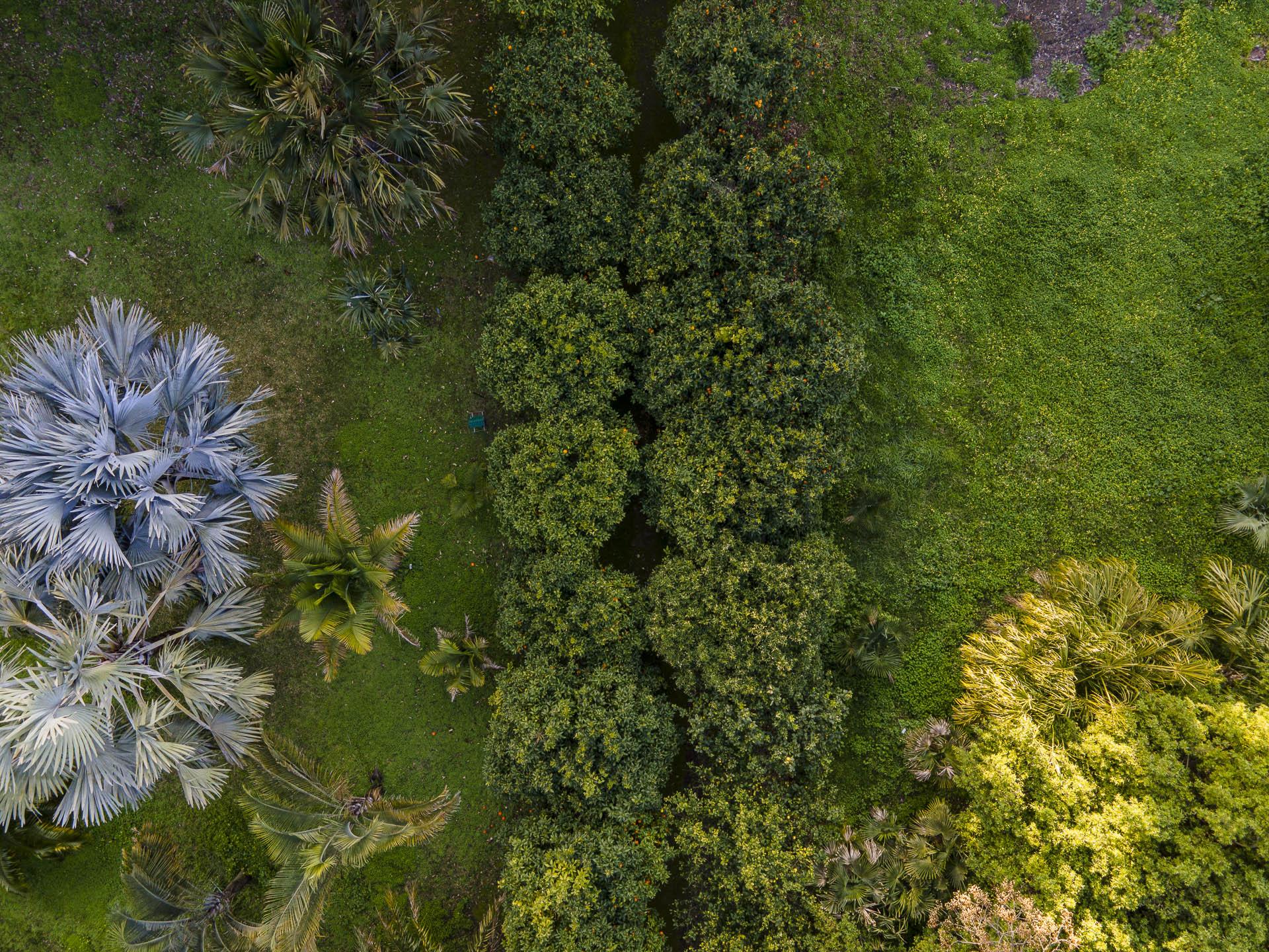 Orto_Botanico_043DJI_0025