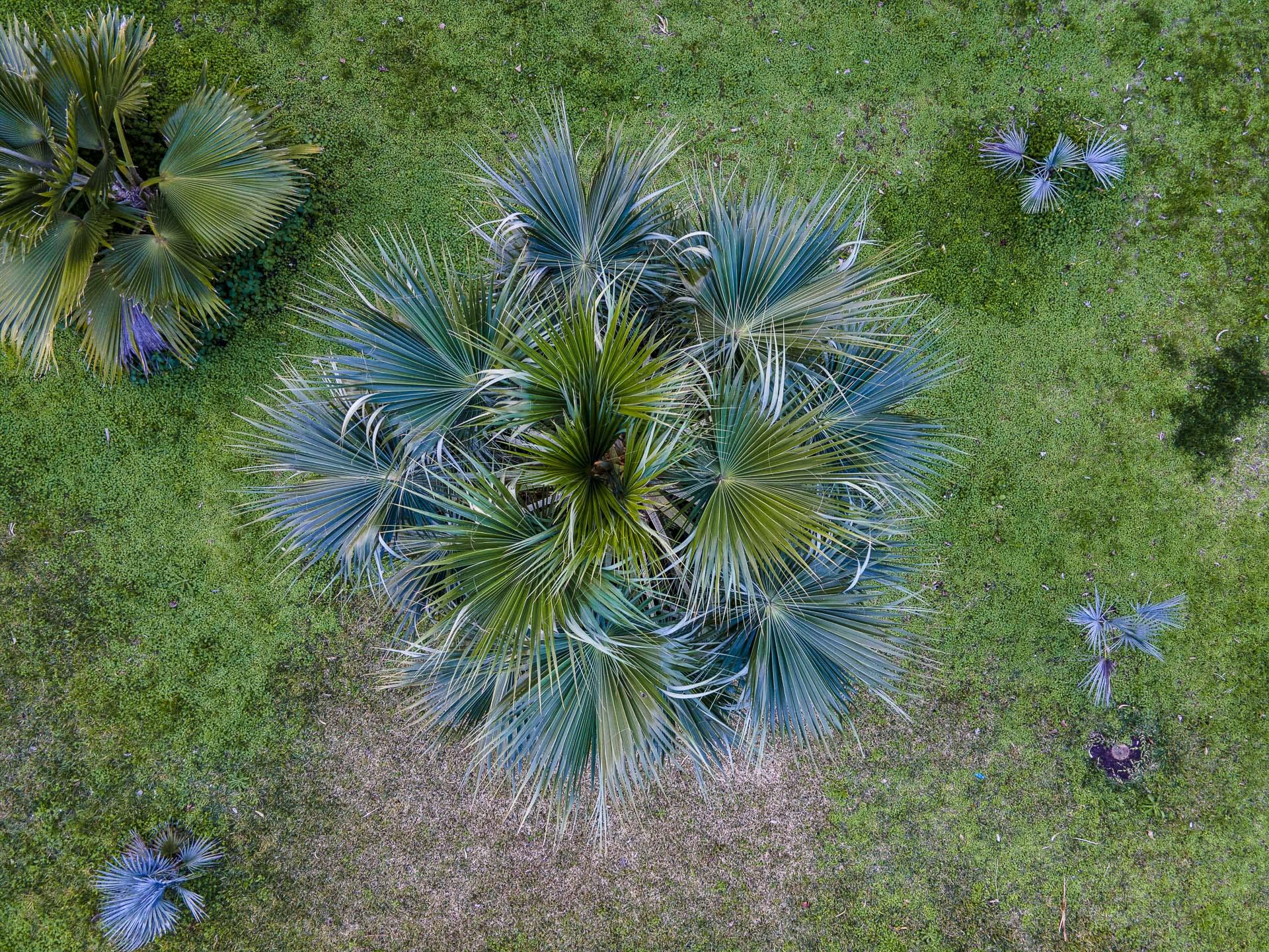 Orto_Botanico_044DJI_0028