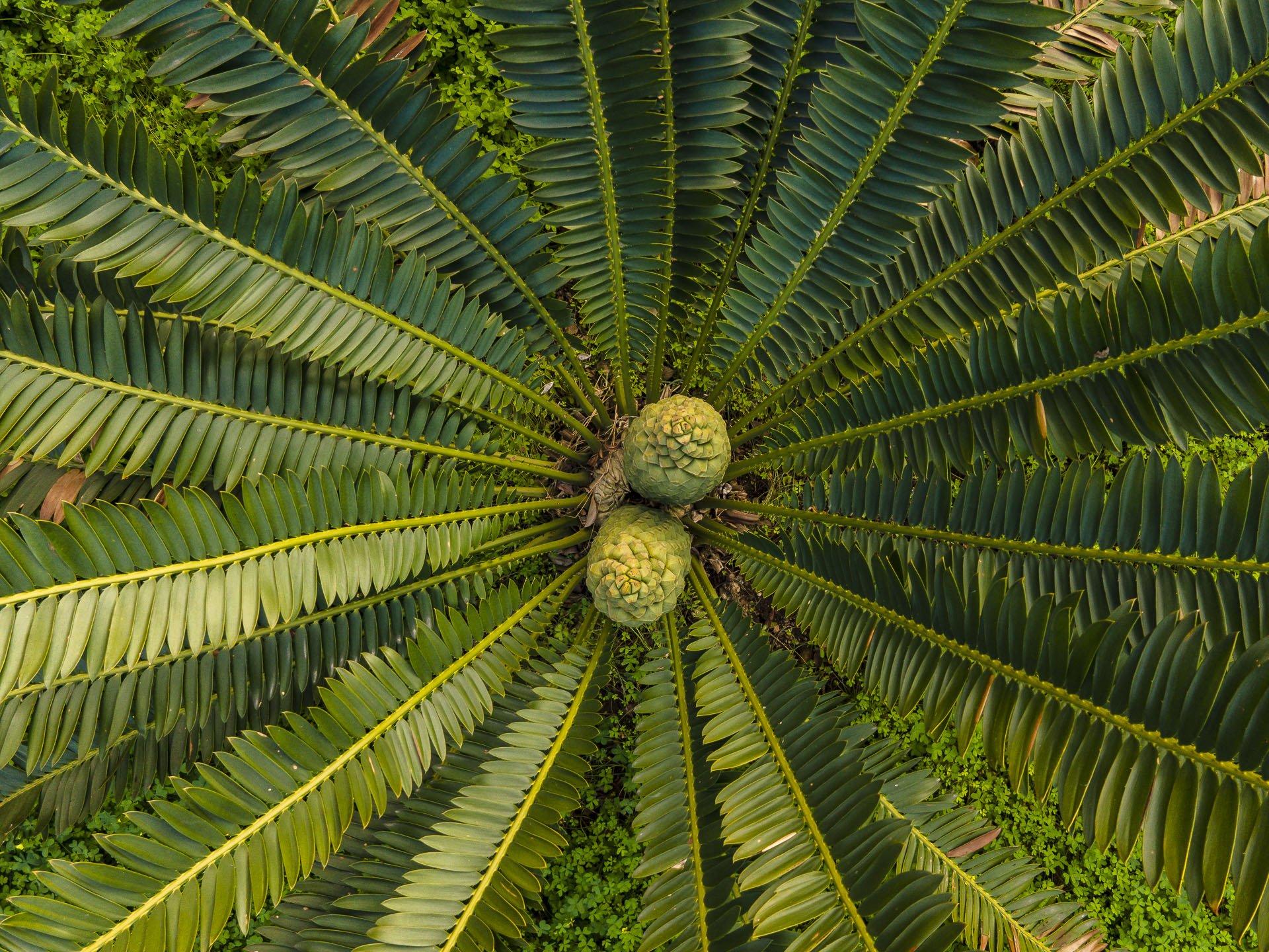 Orto_Botanico_045DJI_0041